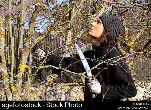 Pruning of tree with handsaw