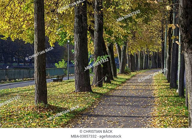 Lime avenue at the Isar river, Munich, Upper Bavaria, Bavaria, Germany