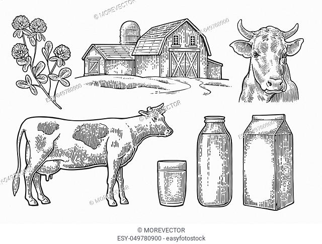 Set Milk farm. Cow head, clover, box carton package, glass and bottle. Vector engraving vintage black illustration. Isolated on white background