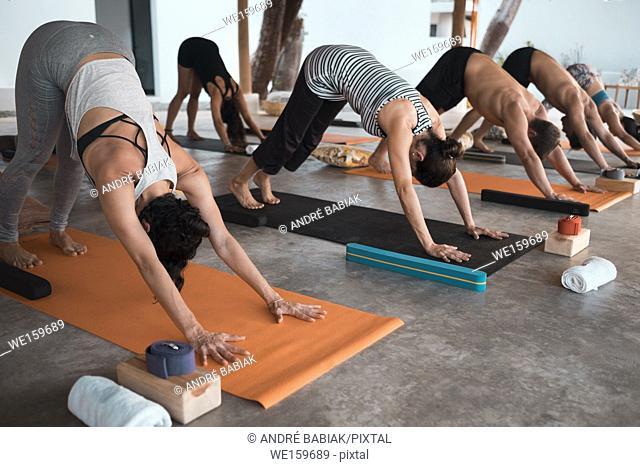 Multiple people exercising yoga on mats