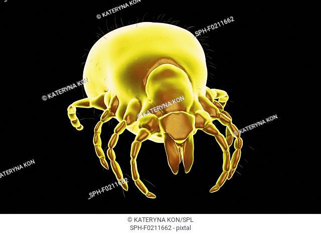 Lyme disease tick, illustration