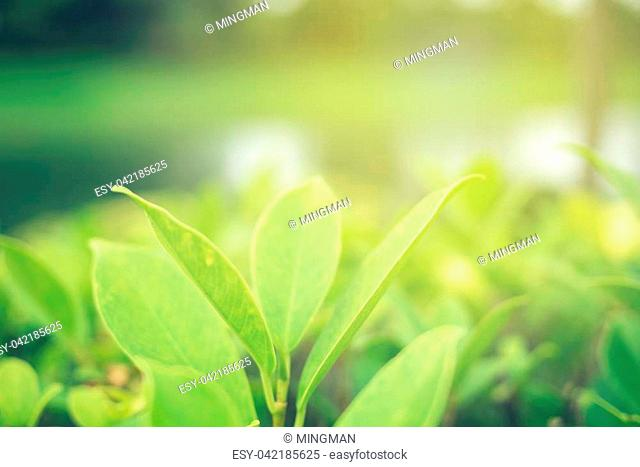 Green leaf soft focus with closeup in nature view on blurred greenery background in the garden with copy space use for design wallpaper concept