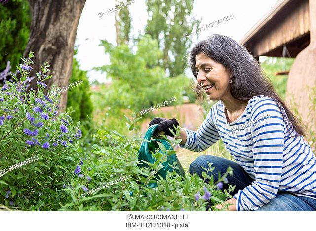 Hispanic woman watering flowers in garden