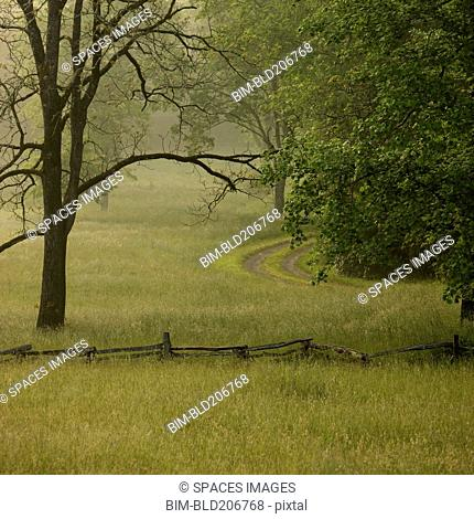 Rural Lane in Morning Fog