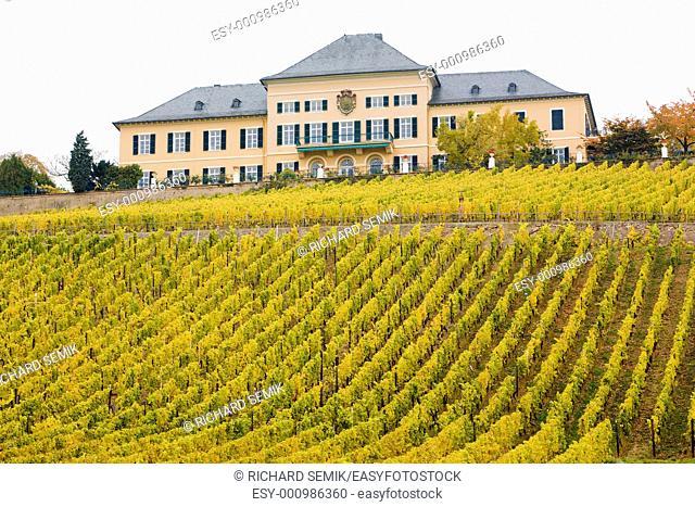 Johannisberg Castle with vineyard, Hessen, Germany