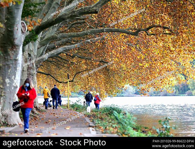 26 October 2020, North Rhine-Westphalia, Essen: Walkers walk under plane trees on the hiking trail along the Baldeney lake