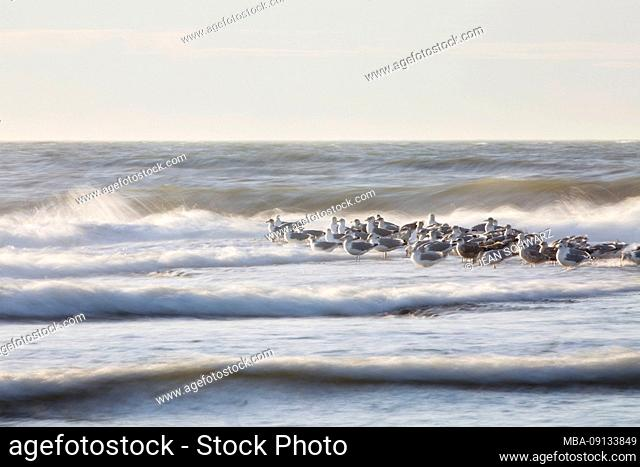 Seagulls are sitting on a groyne in the North Sea