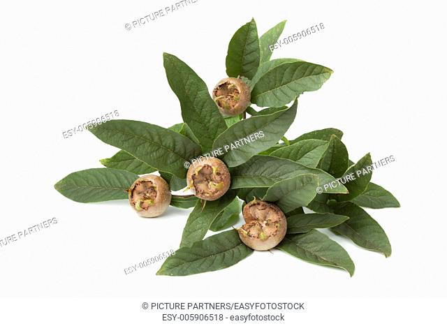 Fresh picked medlars with leaves on white background