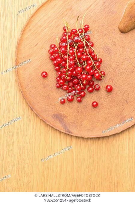 Closeup of red ripe redcurrant berries