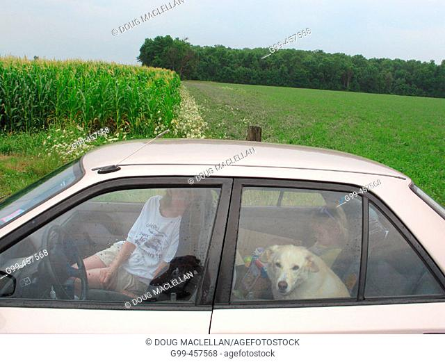 A mother, daughter and family dog stop for a break near a corn field during a family vacation