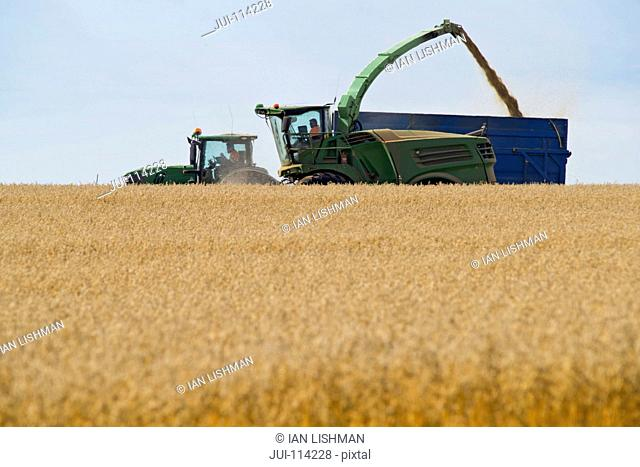 Forage Harvesting Oats And Filling Trailer In Field