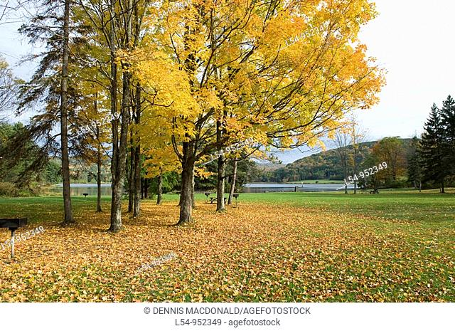 Picnic Area with Fall Colors New York State Park