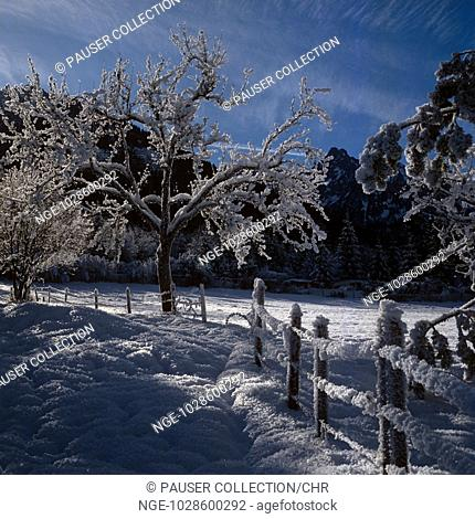 Winter landscape, Bavaria, Germany