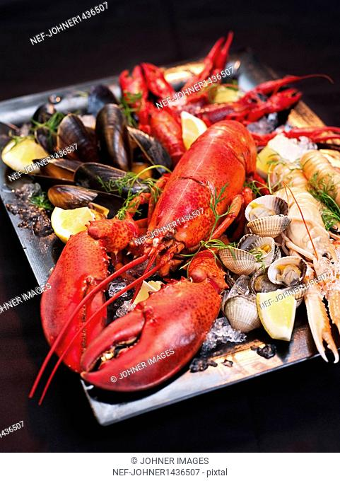 Lobster and mussels on plate