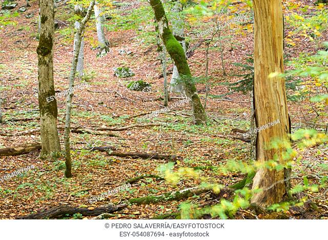 Autumn in Ordesa National Park, Pyrenees, Huesca, Aragon, Spain