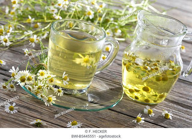 scented mayweed, german chamomile, german mayweed (Matricaria chamomilla, Matricaria recutita), chamomile tea, Germany