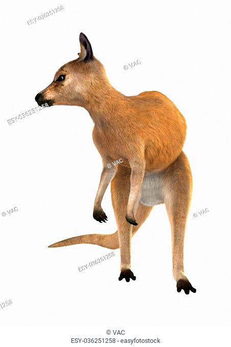 3D digital render of a red kangaroo isolated on white background