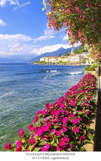 Flowering on the lake side of Bellagio, Province of Como, Como Lake, Lombardy, Italy, Europe
