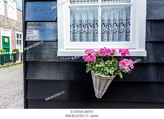 Flowers in basket under window