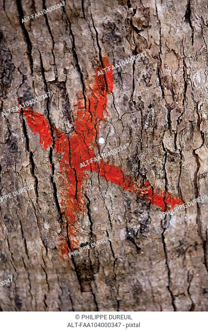 Marked tree trunk