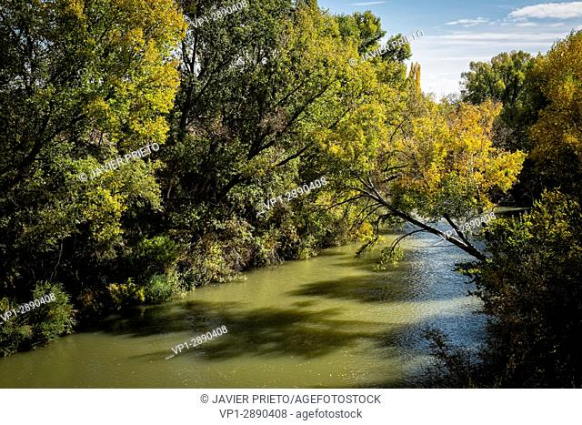 Autumnal view of the Douro River on the trail linking Peñafiel and Pesquera de Duero along the GR. 14 signposted trail. Ribera del Duero. Valladolid
