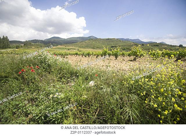 San Vicente de la Sonsierra landscape springtime , La Rioja in Spain