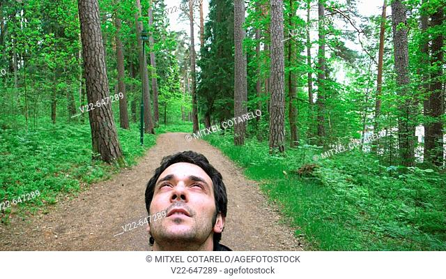 Male looking up in a Swedish forest
