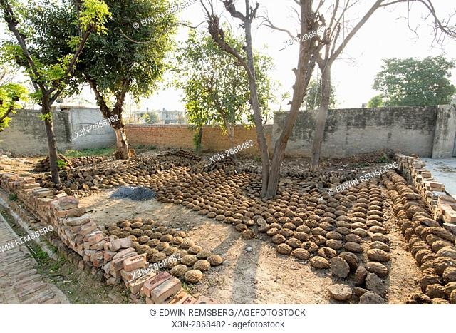 Cow dung patties are placed in rows in a courtyard area in Punjab, India