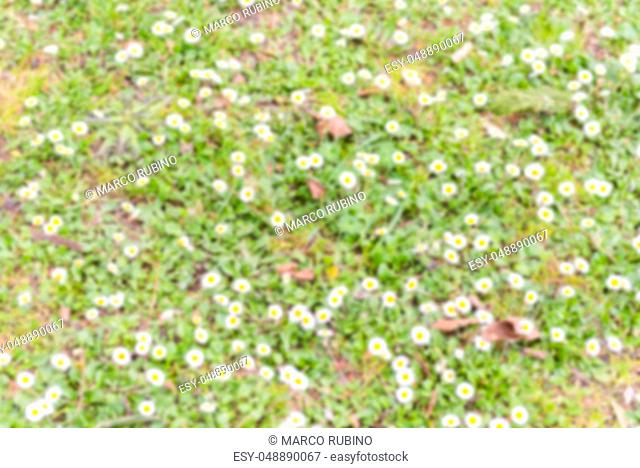 Defocused background of a field with daisy flowers. Intentionally blurred post production for bokeh effect