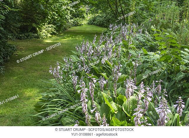 Wilderness garden at Renishaw Hall and Gardens, Renishaw, Derbyshire, UK