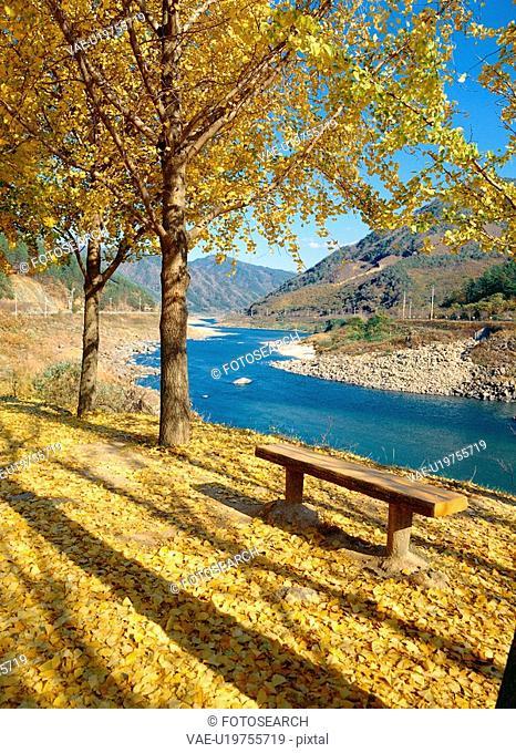tree, nature, mountain, river, scenery, film