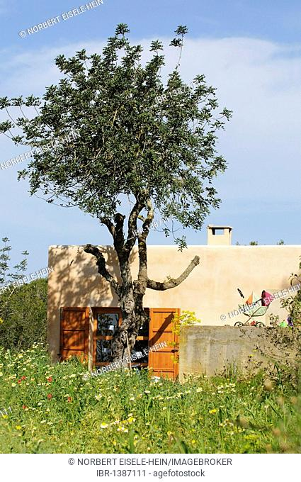 Finca near Saint Llorenc, Ibiza, Pine Islands, Balearic Islands, Spain, Europe