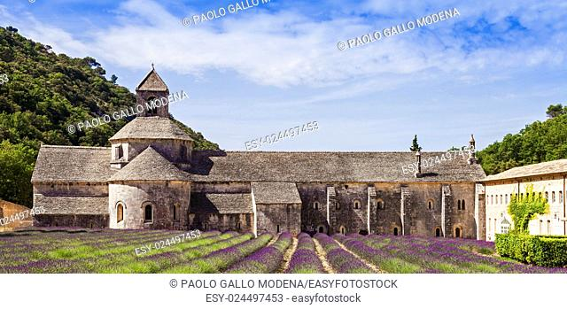 France, Provence Region, Senanque Abbey. Lavander field in summer season