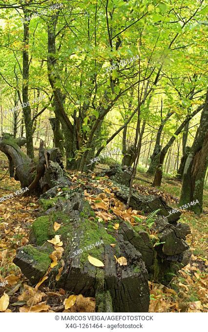 Autumnal landscape  O Courel Mountains, Lugo, Galicia, Spain