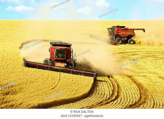 Multiple Combines Harvesting Wheat On The Hills Of The Palouse Region Of Eastern Washington; Washington, United States Of America