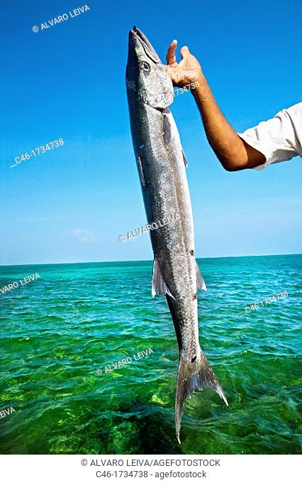 Fish  Caye Caulker  Belize