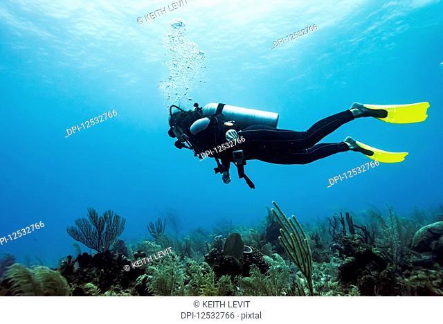 Scuba diver at Joe's Wall Dive Site, Belize Barrier Reef; Belize
