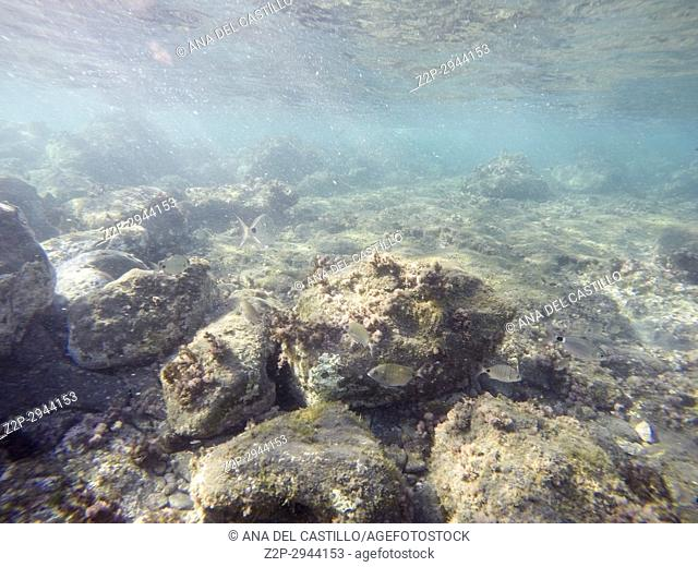 Underwater image in Cabo de Gata nature reserve in Almeria Andalusia Spain