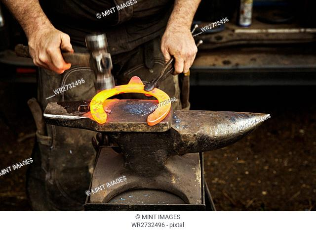 A farrier using tongs and hammer to hold and shape a red glowing heated metal horseshoe to be fitted