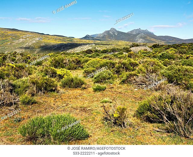 Sierra de la Paramera. Avila. Castilla Leon. Spain