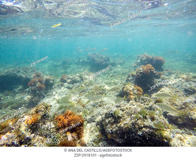 Underwater image. Las Rotas nature reserve, La Nao cape, Denia, Alicante, Spain