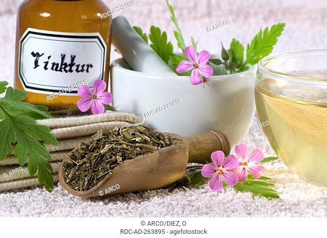 Herb Robert tea dried Herb Robert Geranium robertianum mortar tincture