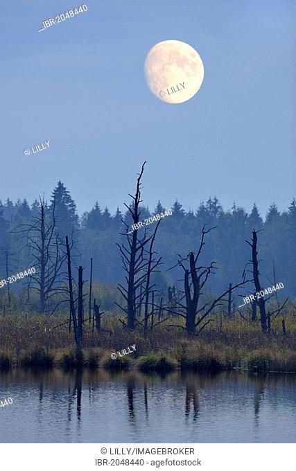 Moon over Schwenninger Moos Nature Reserve, source of the Neckar River, Villingen-Schwenningen, Black Forest, Baden-Wuerttemberg, Germany, Europe