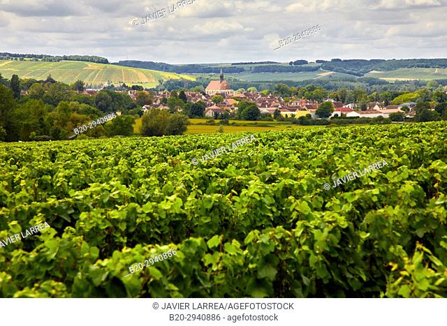 Vineyards of Chardonnay, Chablis, Yonne, Bourgogne, Burgundy, France, Europe