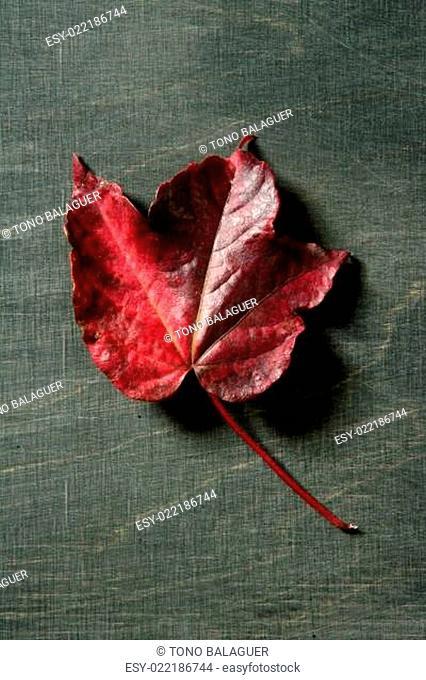 Leaves still of autumn leaves, dark wood background