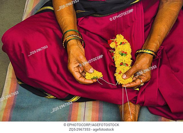 Woman devotee, wearing 9 yard saree making yellow flowers garland for the ceremonial puja of the deity. Patit Pavan Sri Ram Mandir, Belgavi, Karnataka, India