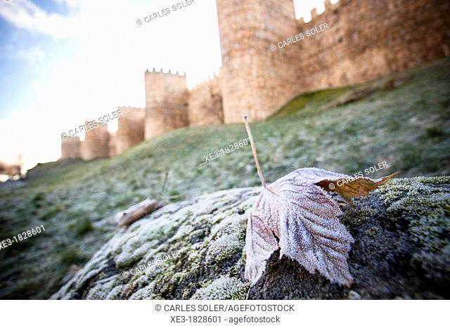 Frosted leaf and City Wall, Avila, Spain