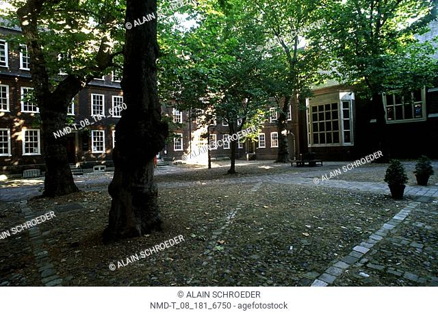 Trees in front of houses, Staple Inn, London, England
