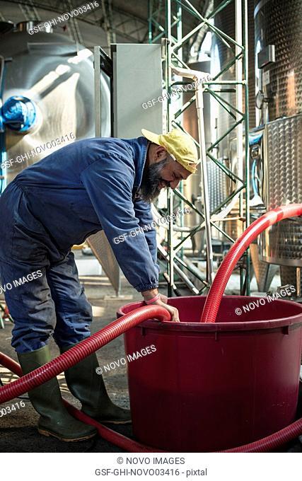 Worker at Winery, Gattinara, Piedmont, Italy