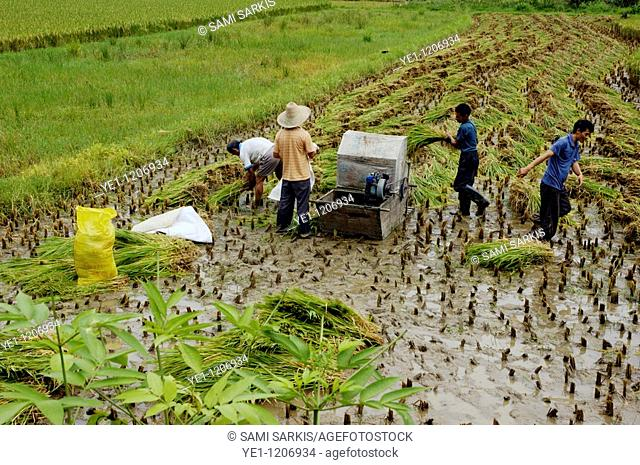 Peasants using a simple machine to harvest rice, Yangshuo, Guangxi, China